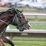 race track betting